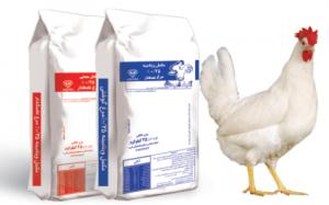 بهترین مکمل مرغ تخمگذار