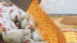 قیمت روز مکمل خوراک طیور